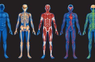 awesome-facts-about-the-human-body